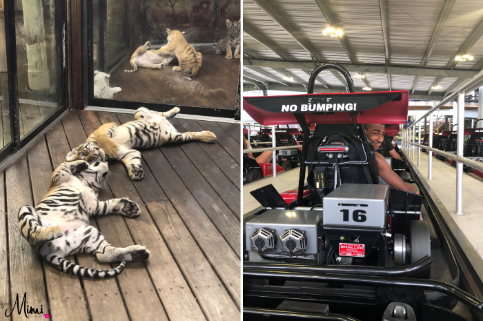 The track myrtle beach fun tiger preservation